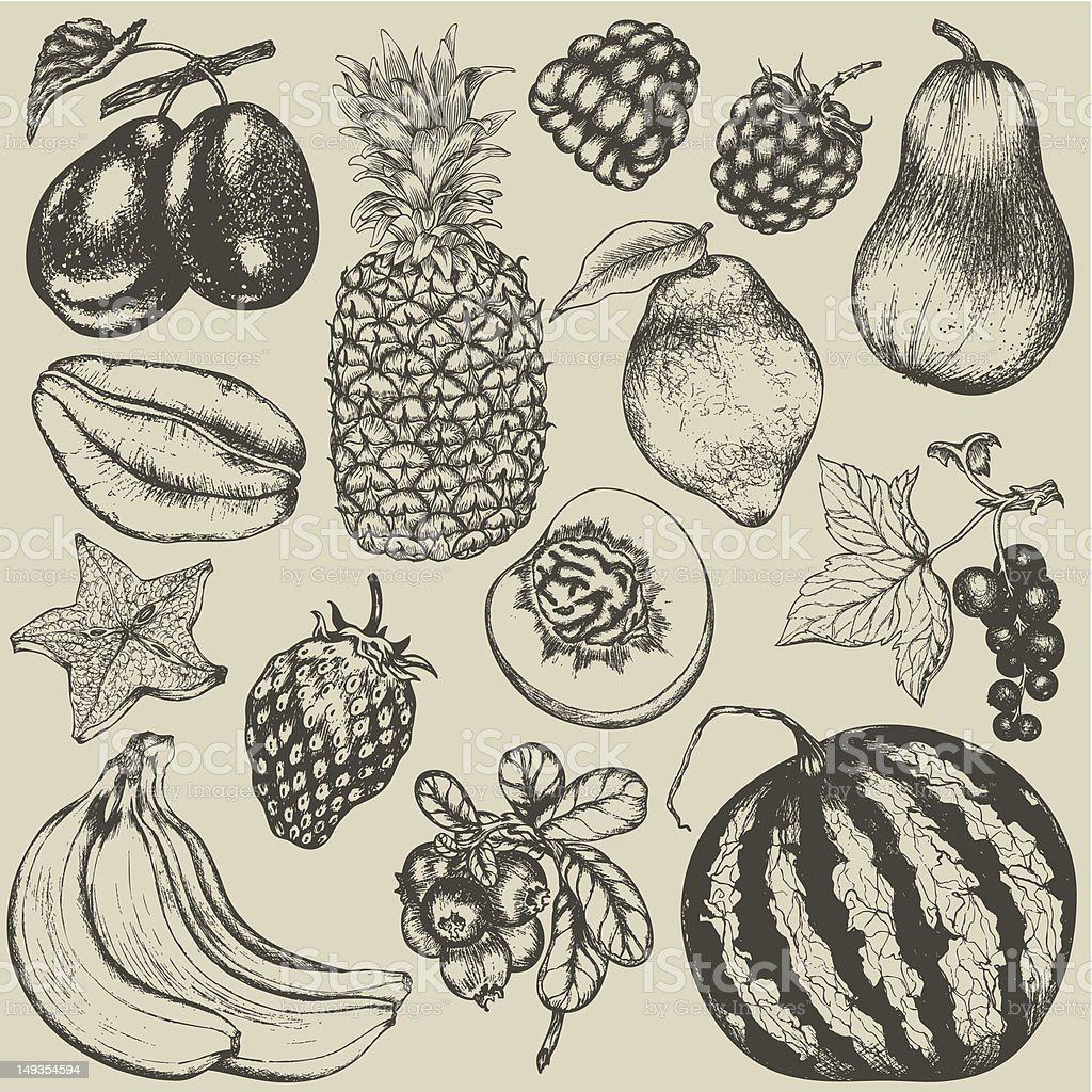 Hand-drawn set of fruit and berries royalty-free stock vector art