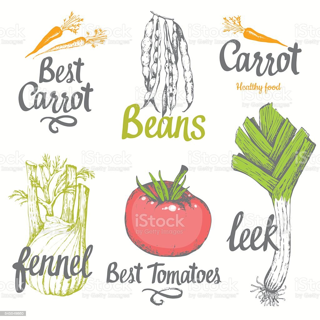 Hand-drawn sketch of vegetables. vector art illustration
