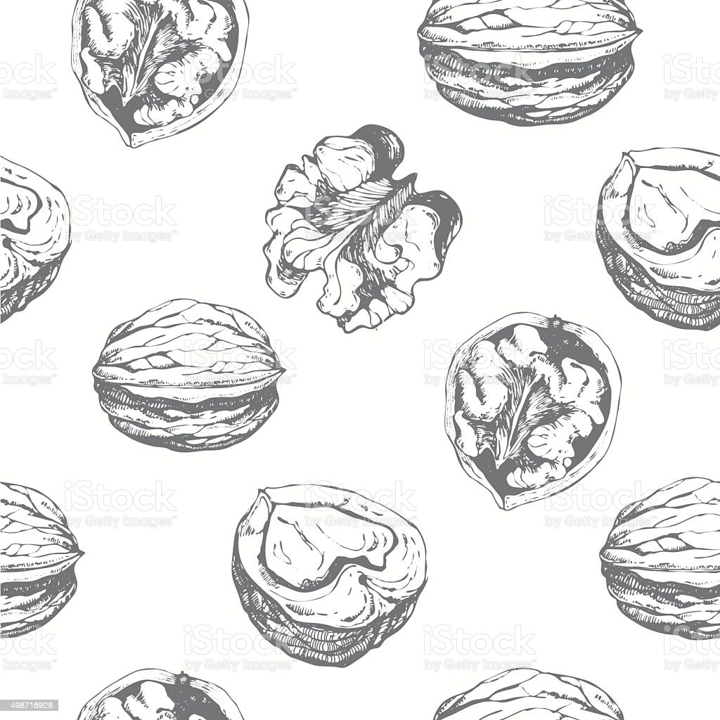Hand-drawn sketch of walnuts. Seamless nature background. vector art illustration