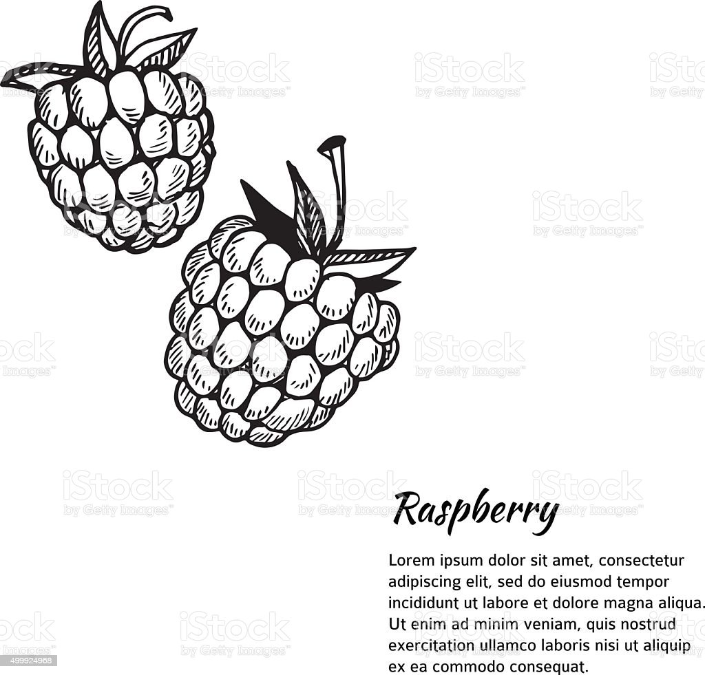 Hand-drawn vector illustration. Card or banner with raspberry. vector art illustration