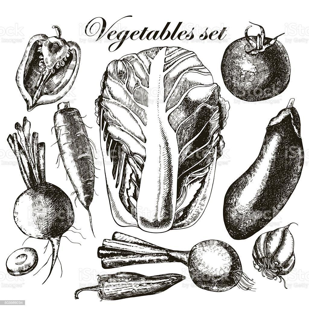 Handmade work - set vegetables. Vector. vector art illustration