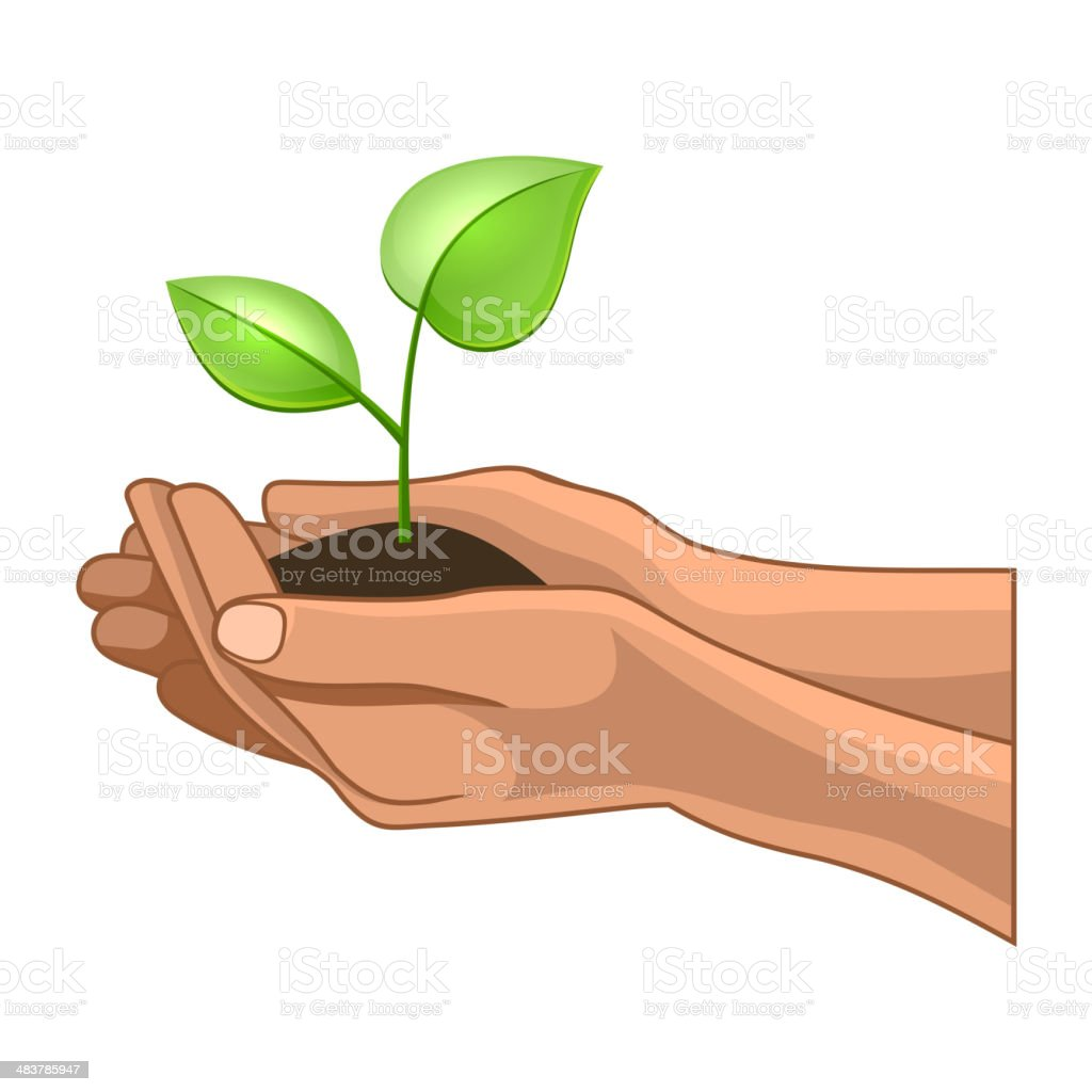 Hands and Plant on White Background. Vector royalty-free stock vector art