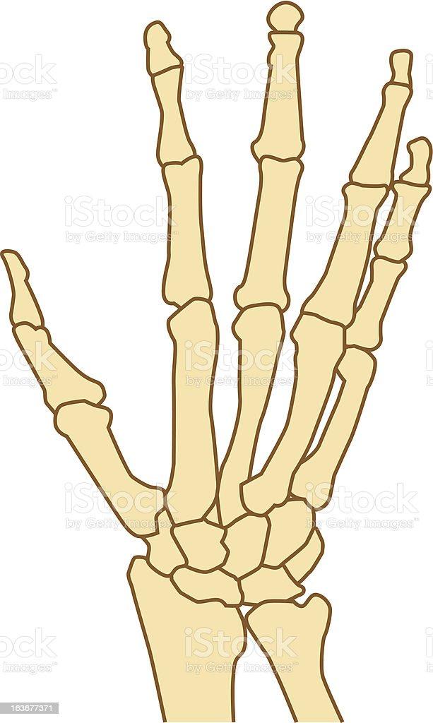 Hands bone royalty-free stock vector art