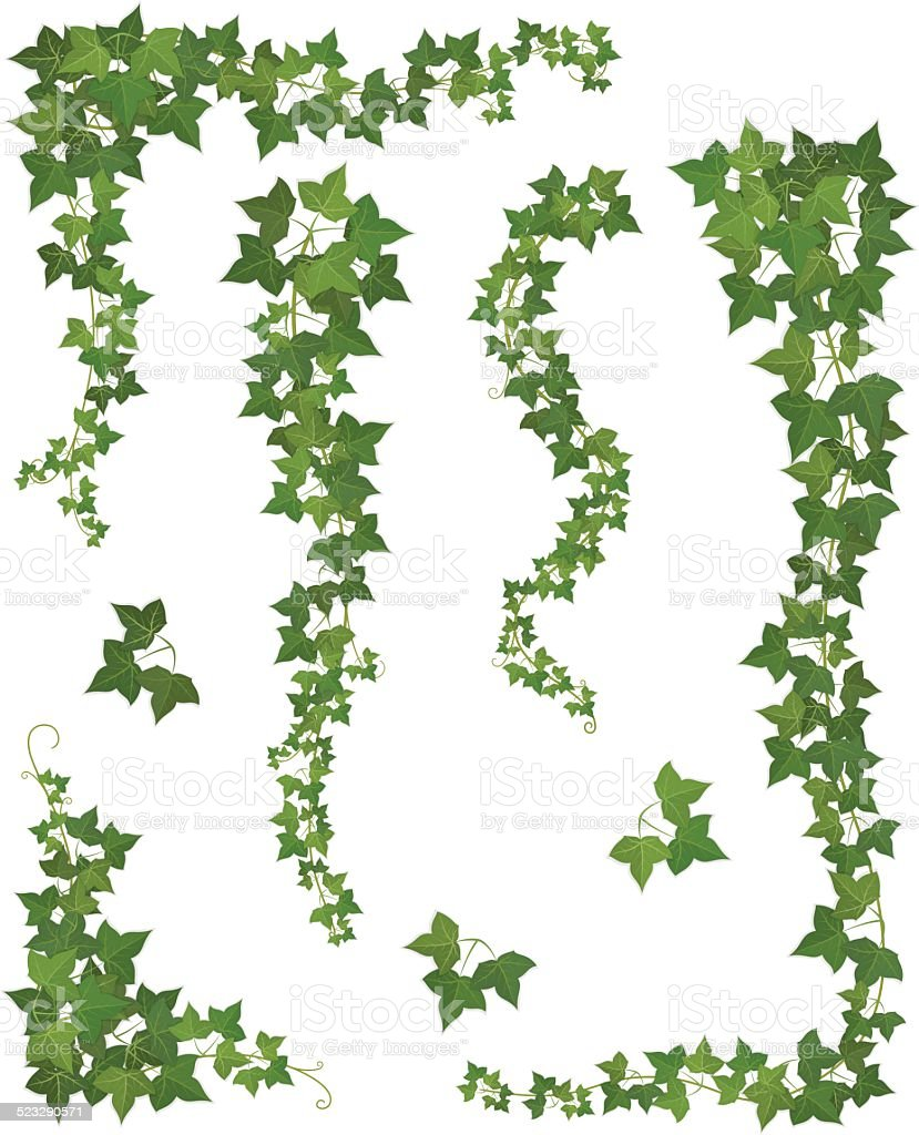 Hanging branches of ivy. Set vector art illustration