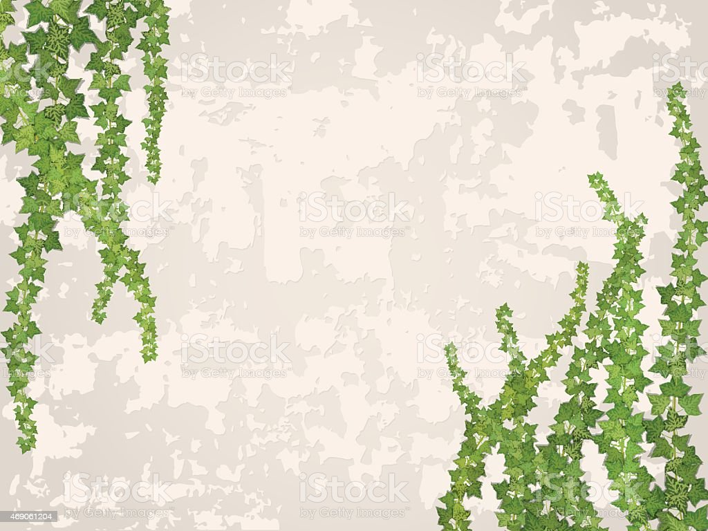 hanging vines on the background of old stucco wall vector art illustration