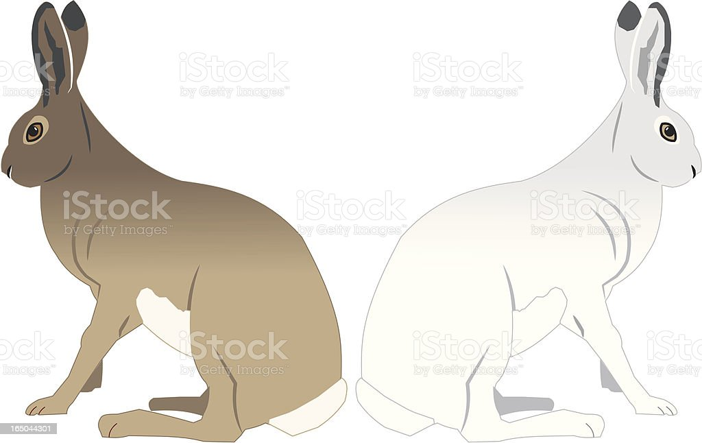 Hares royalty-free stock vector art