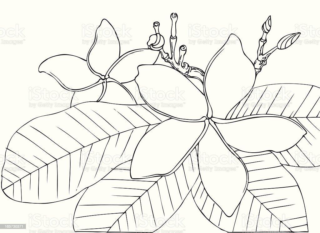 Hawaiian Vintage Flowers in Black and White vector art illustration