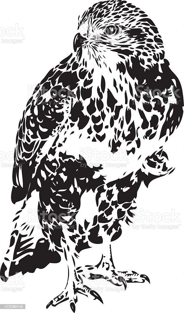 Hawk illustration in B&W royalty-free stock vector art