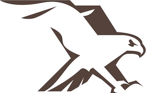 Hawk Bird Clip Art, Vector Images & Illustrations - iStock