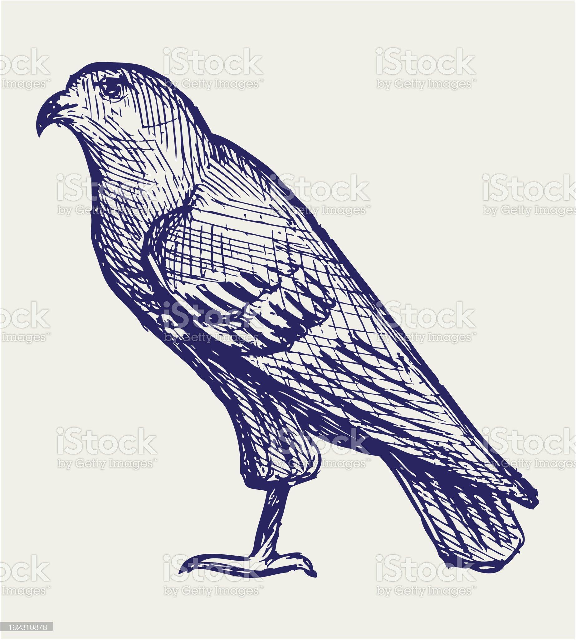 Hawk royalty-free stock vector art