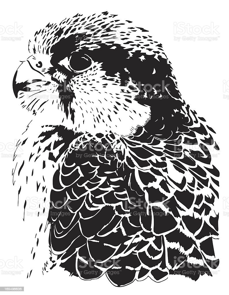 Hawk Vector royalty-free stock vector art