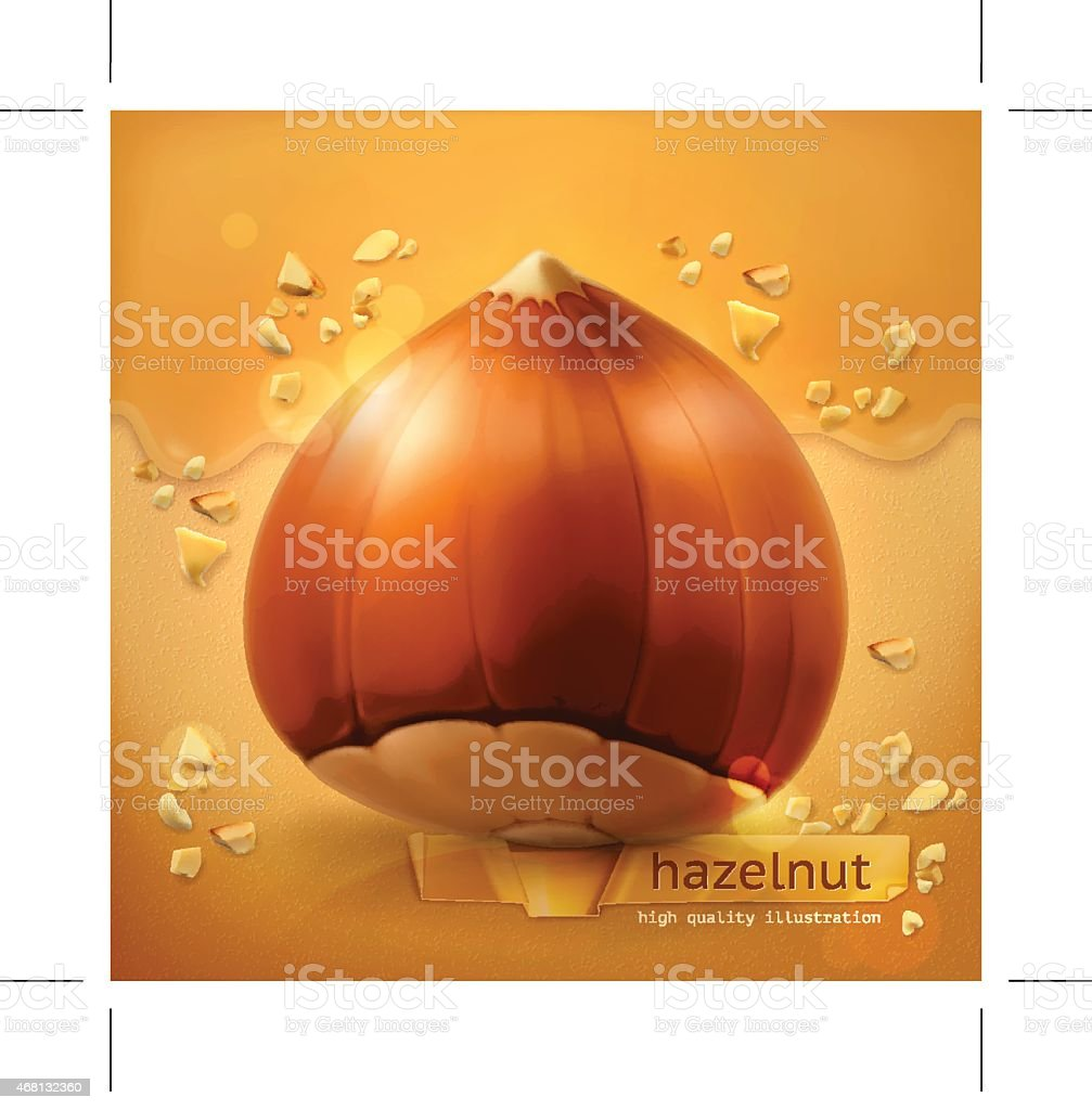 Hazelnut, vector background vector art illustration