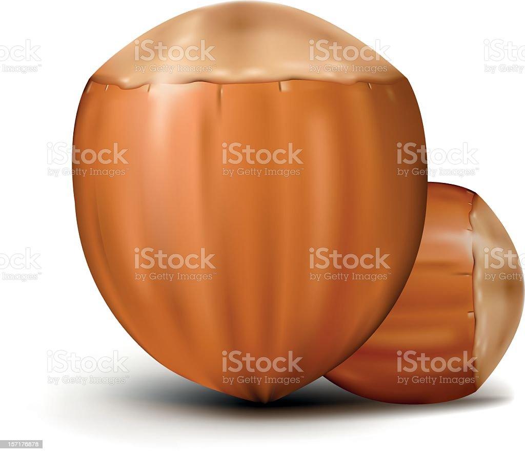 Hazelnut clipart