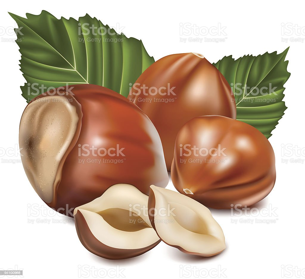 Hazelnuts with leaves. royalty-free stock vector art