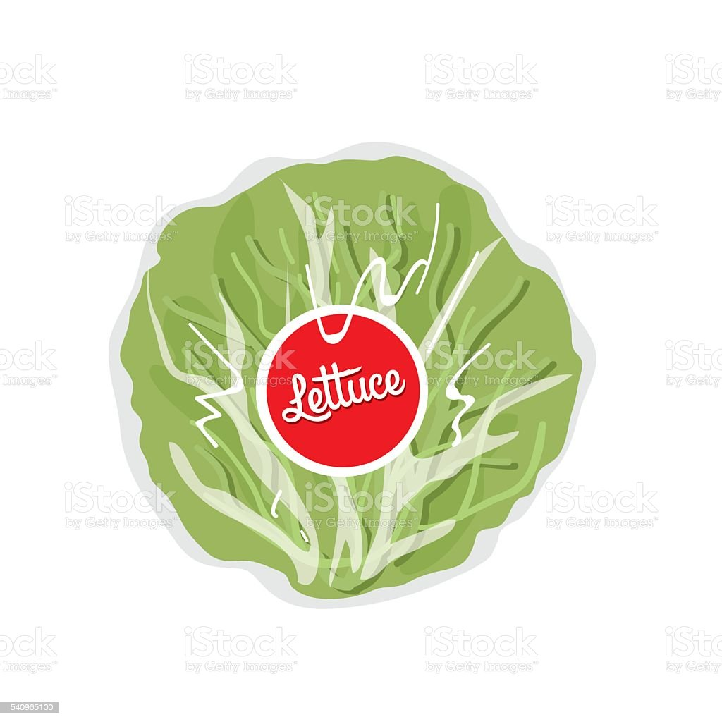Head Of Lettuce Wrapped In Clear Plastic Film vector art illustration