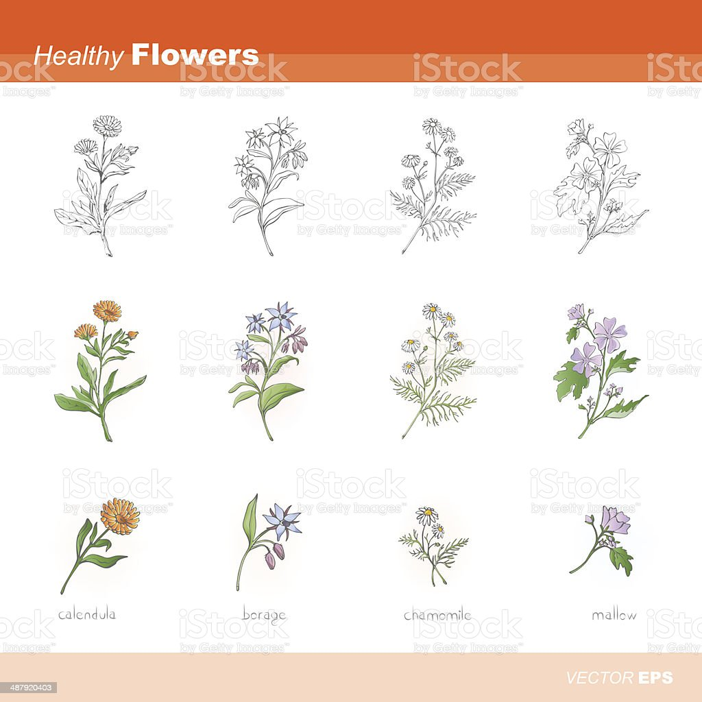 Healthy flowers vector art illustration
