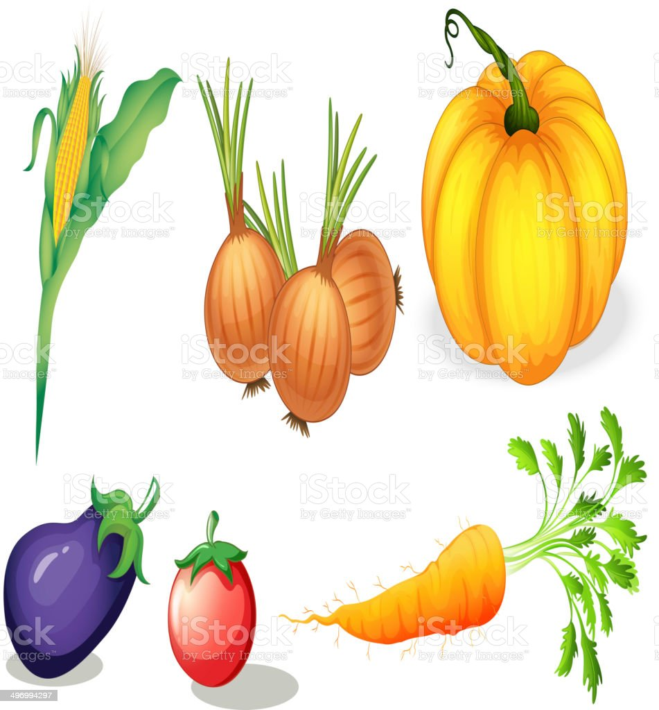 Healthy vegetables and spices royalty-free stock vector art