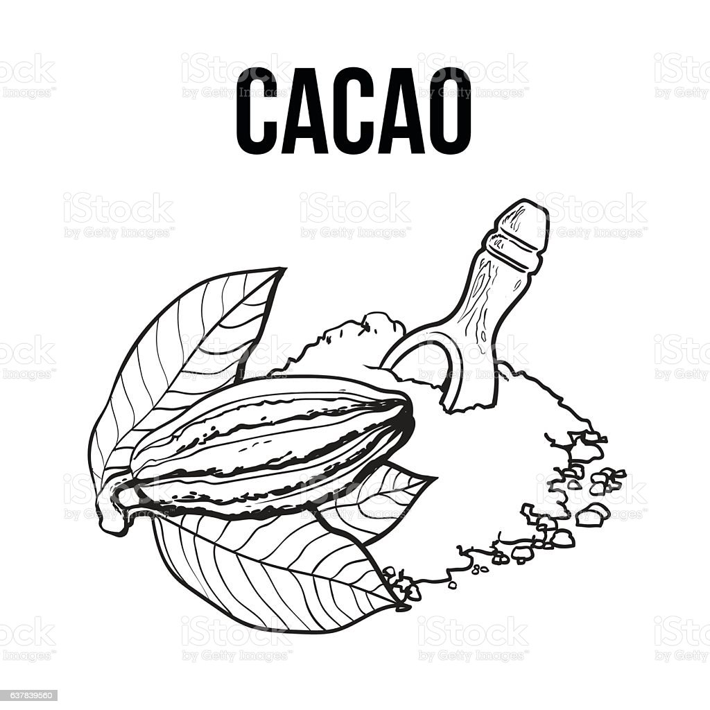 Heap of cocoa powder with wooden scoop and cacao fruit vector art illustration