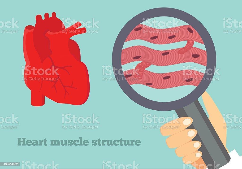 Heart muscle structure illustration. Illustration of cardiac tissue. vector art illustration