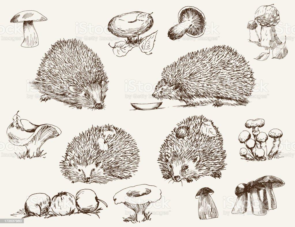hedgehog royalty-free stock vector art
