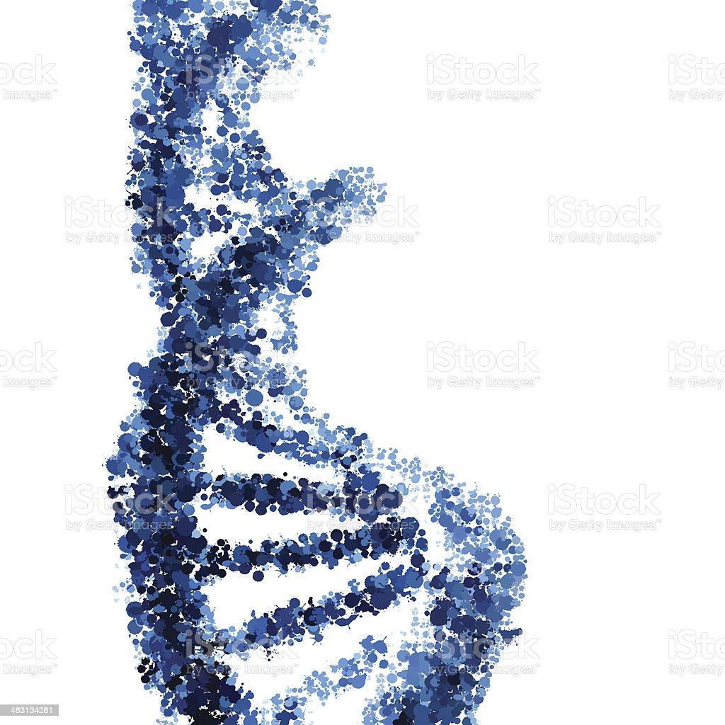DNA hélice vetor isolado no fundo branco vetor e ilustração royalty-free royalty-free