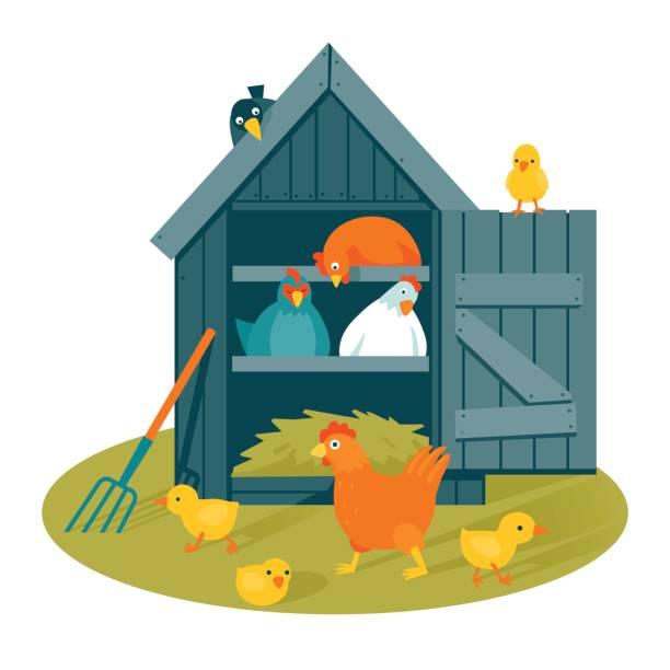 Chicken Coop Clip Art, Vector Images & Illustrations - iStock