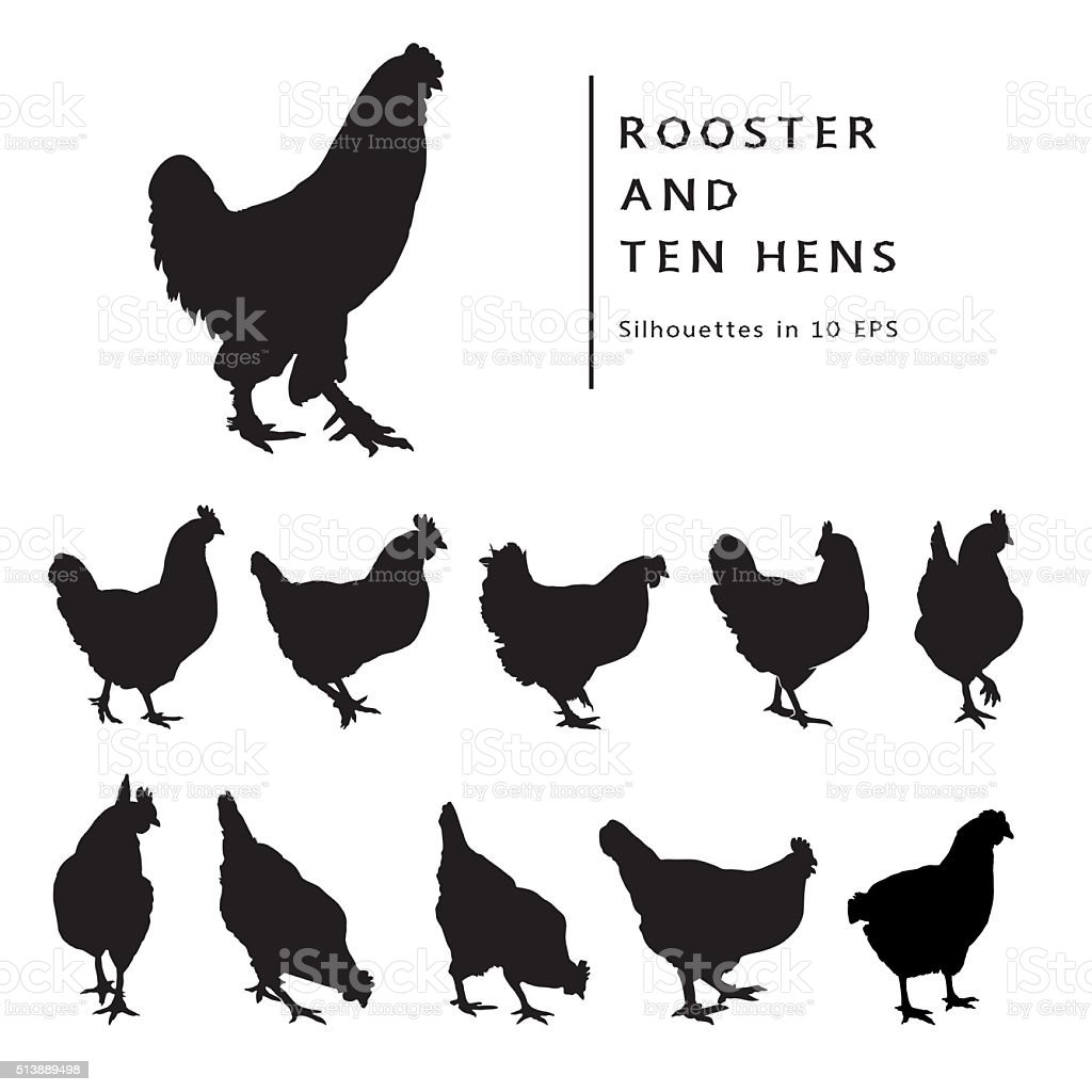 Hens And Rooster. vector art illustration