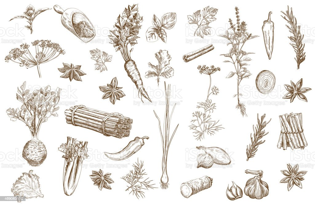 Herb and spices set vector art illustration