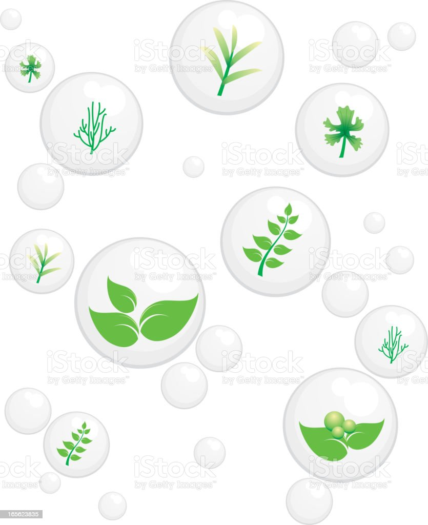 herb bubbles royalty-free stock vector art
