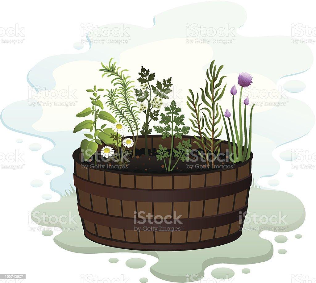 Herb Garden in a Barrel vector art illustration