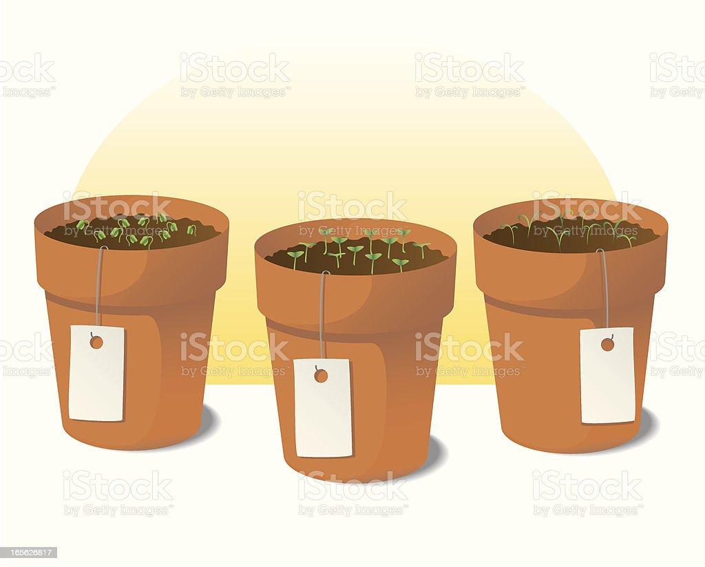 Herb Garden vector art illustration