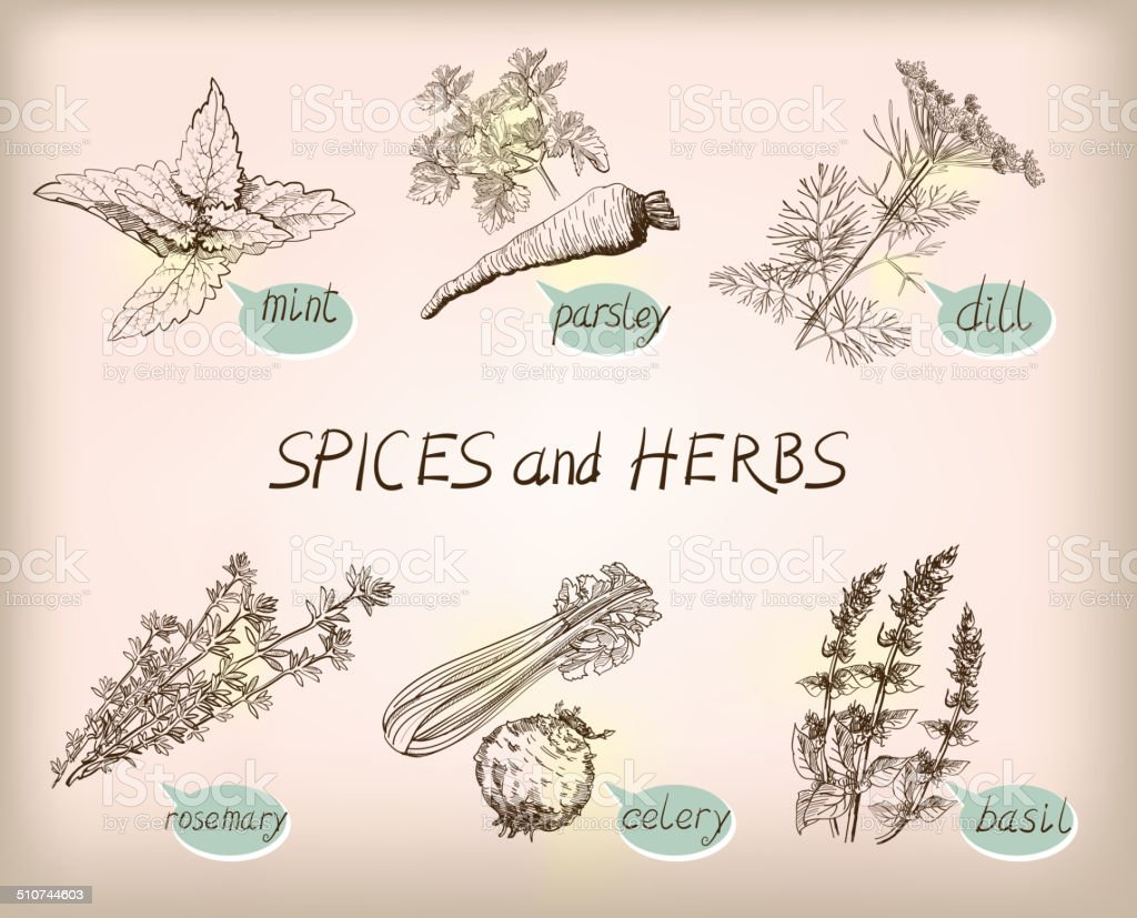 herb spice vector art illustration