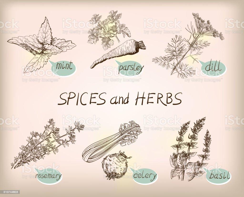 herb spice vector art illustration