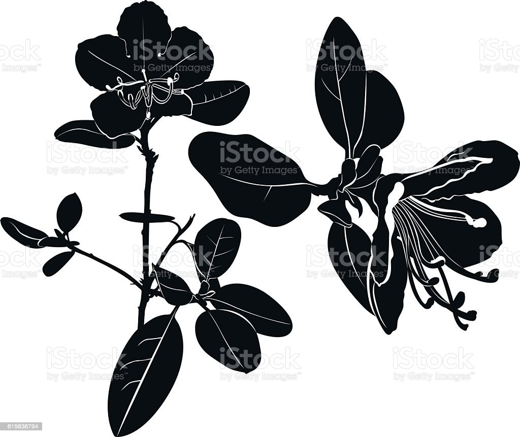 herb Wild rosemary isolated vector black silhouette vector art illustration