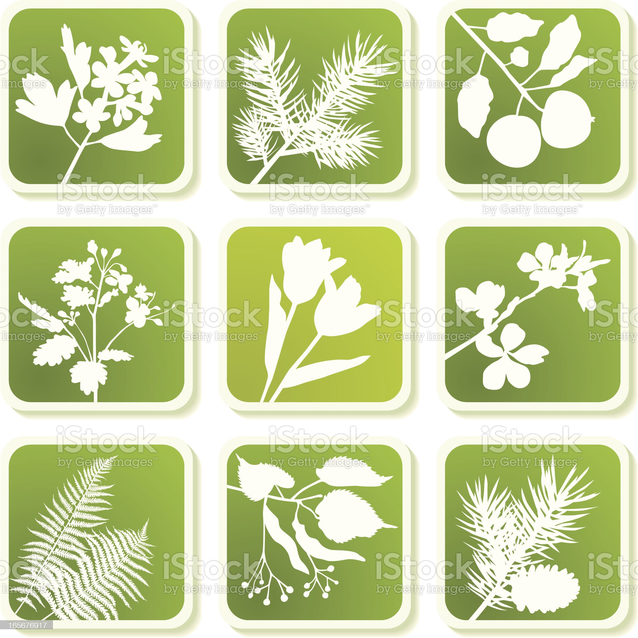 Herbal icons royalty-free stock vector art
