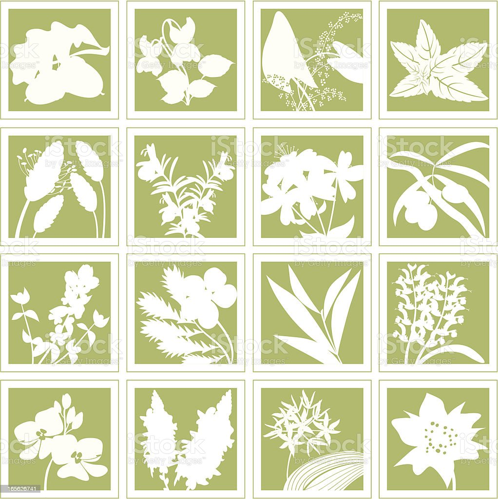 Herbal Plants Medical Herbs Silhouettes Set royalty-free stock vector art