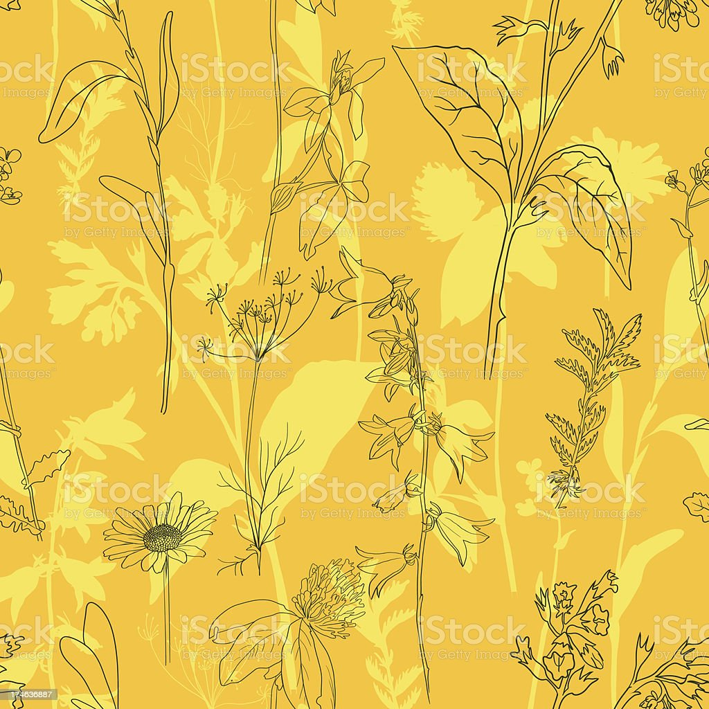 Herbal seamless pattern vector art illustration