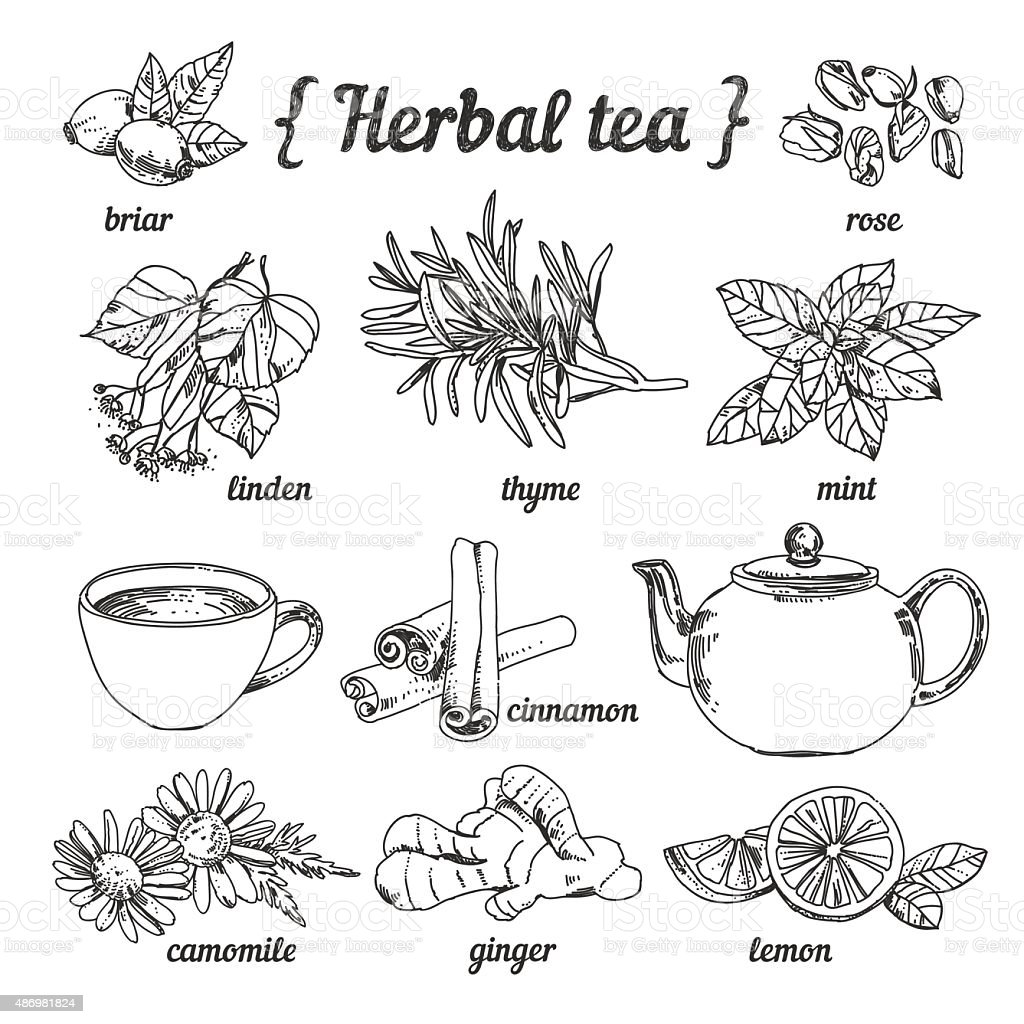 Herbal tea ingredients: herbs, berries, flowers, fruit vector art illustration