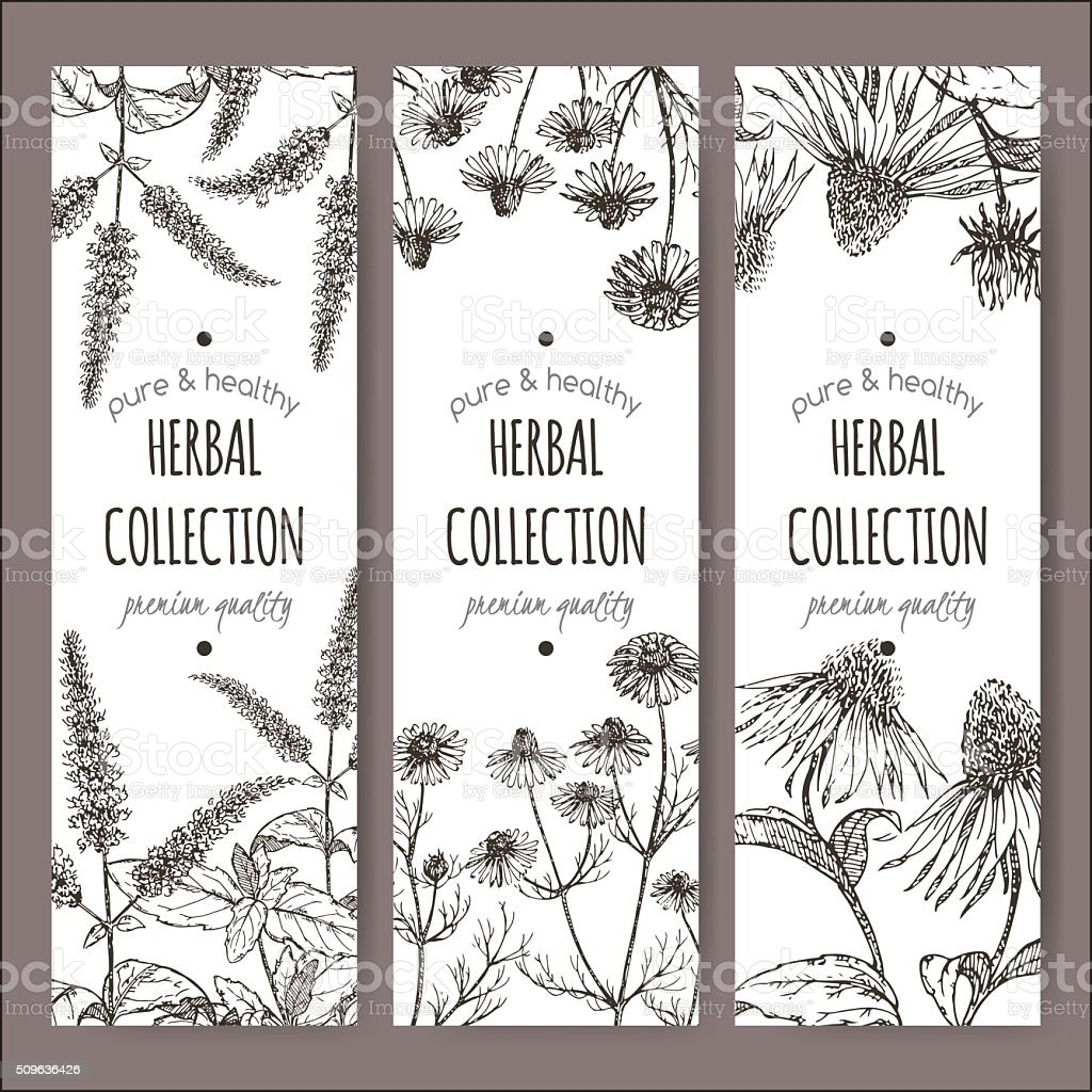 Herbal tea labels with peppermint, chamomile, echinacea vector art illustration