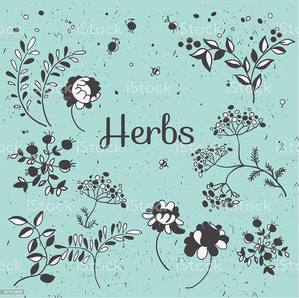 Herbs and flowers set. Hand drawn plants. Vector botanical illustrations. vector art illustration