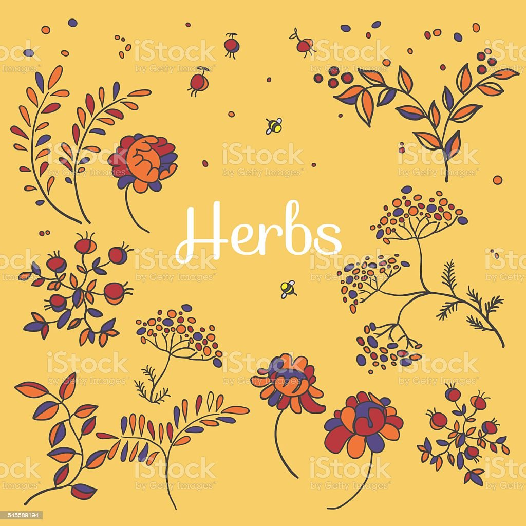 Herbs and flowers set. Hand drawn plants.Floral sketches vector art illustration