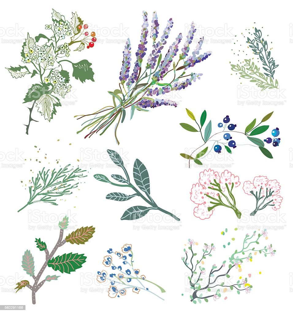 Herbs and plants for herbal medicine. vector art illustration