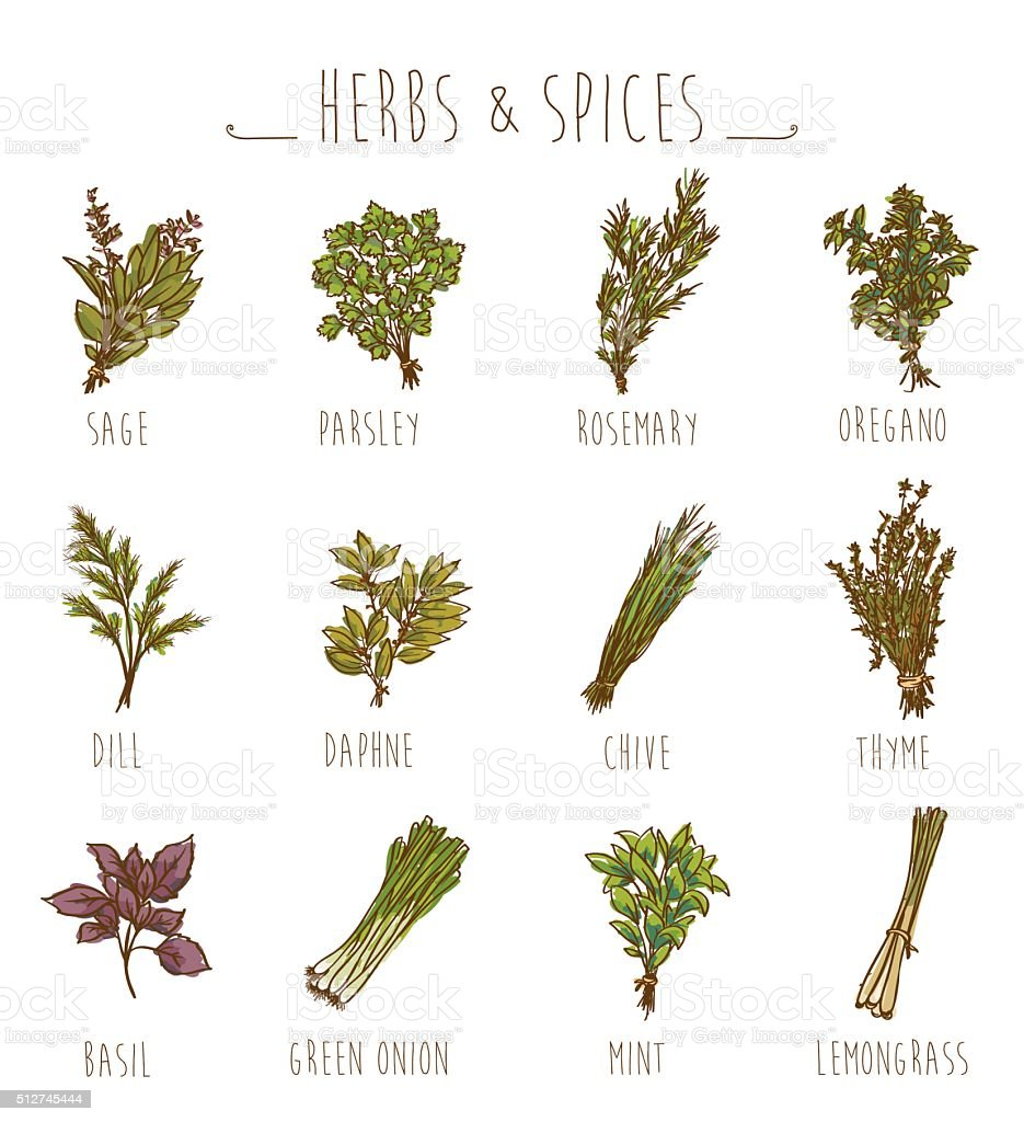 herbs and spices collection vector art illustration