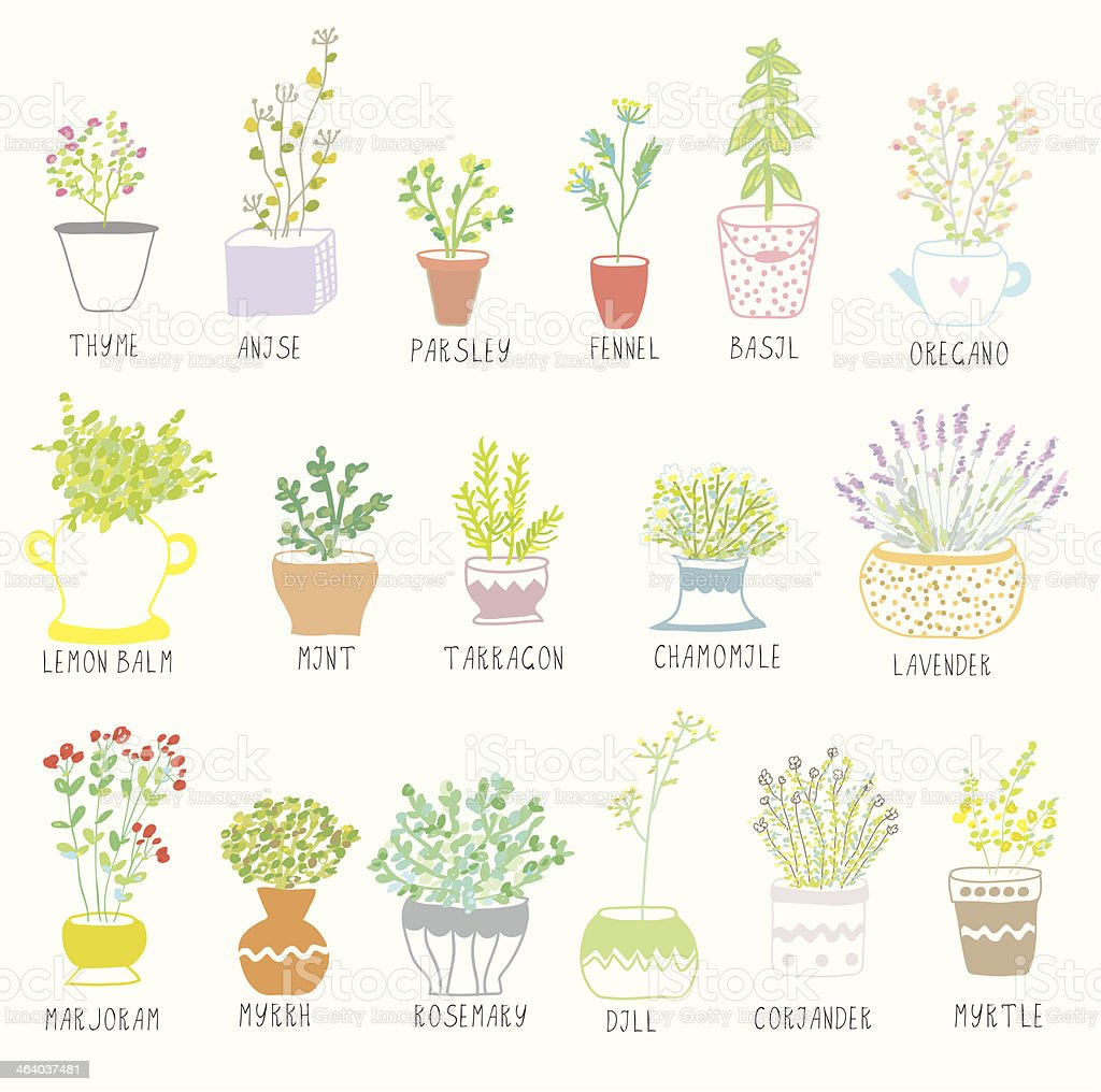 Herbs and spices set in pots with flowers royalty-free stock vector art