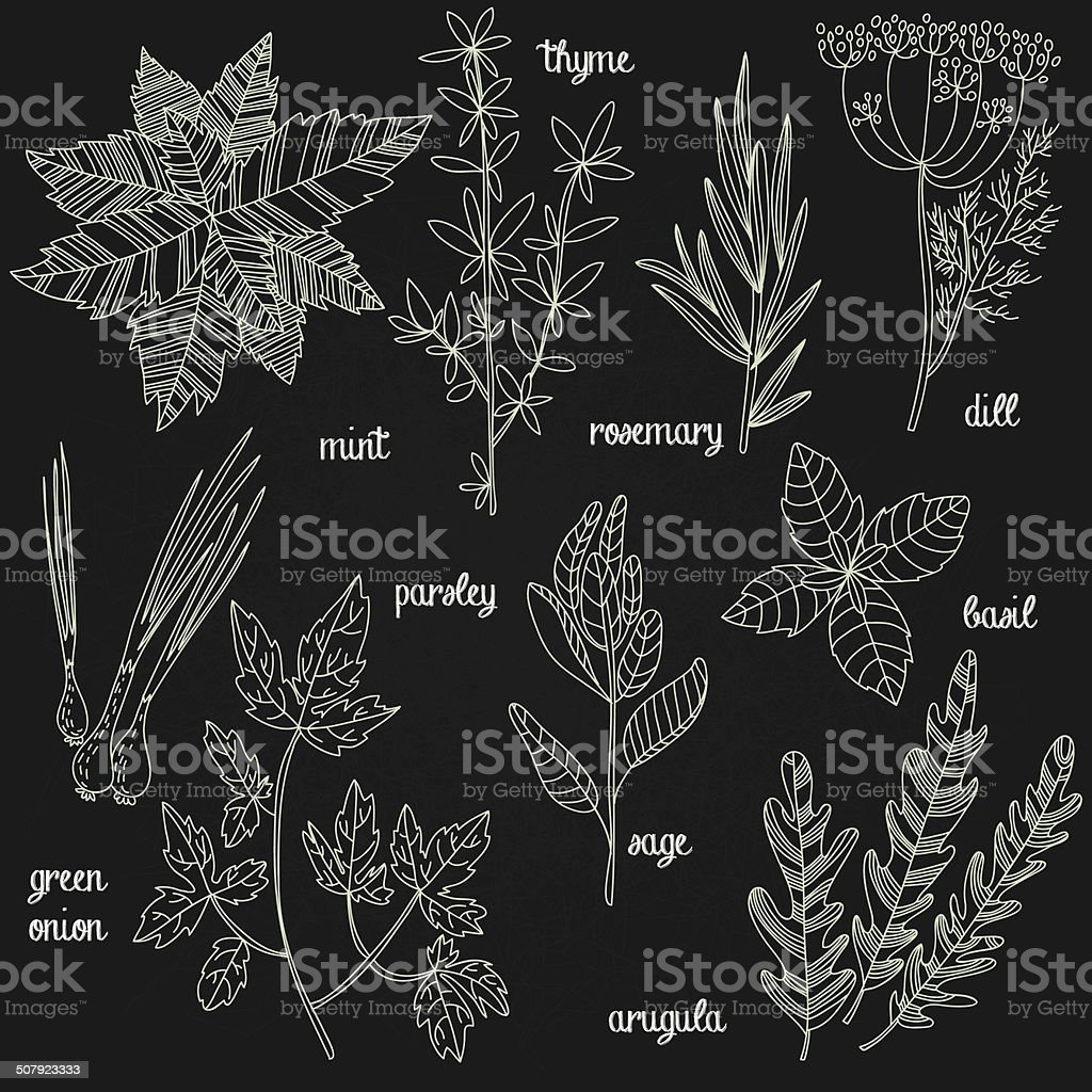 Herbs and spices set in vector vector art illustration