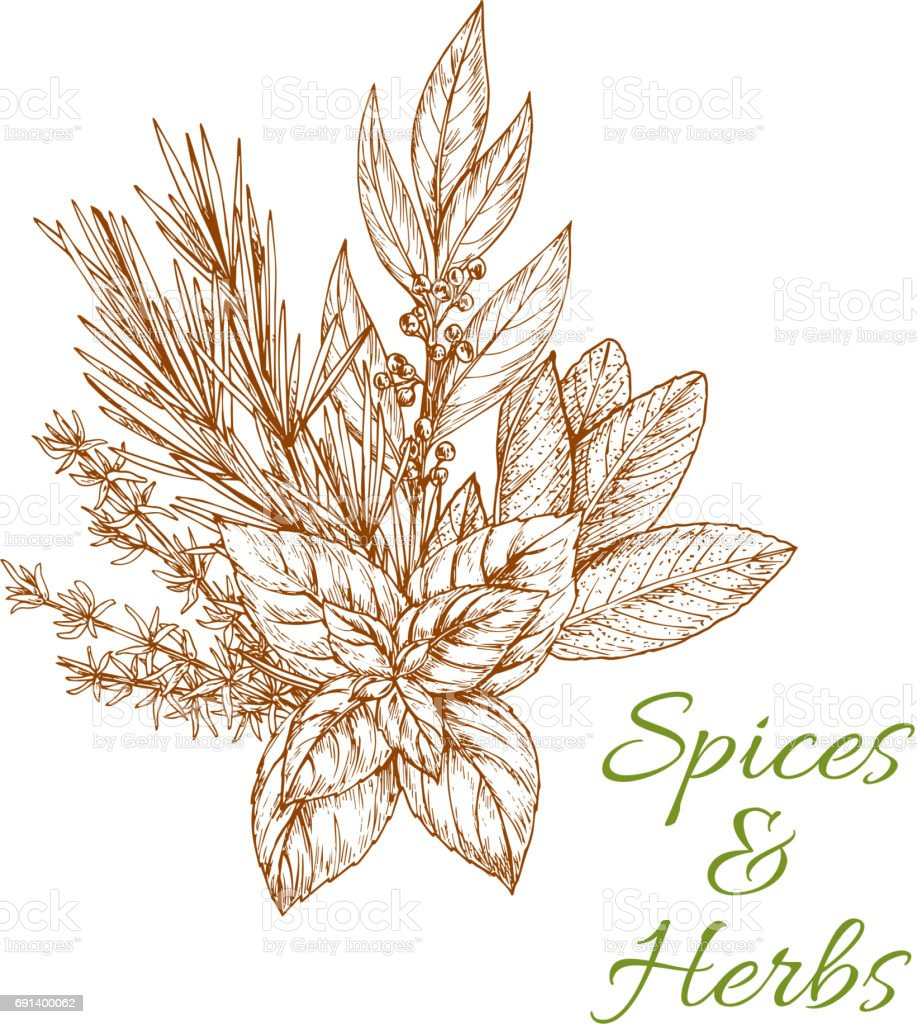 Herbs and spices sketch vector condiments vector art illustration