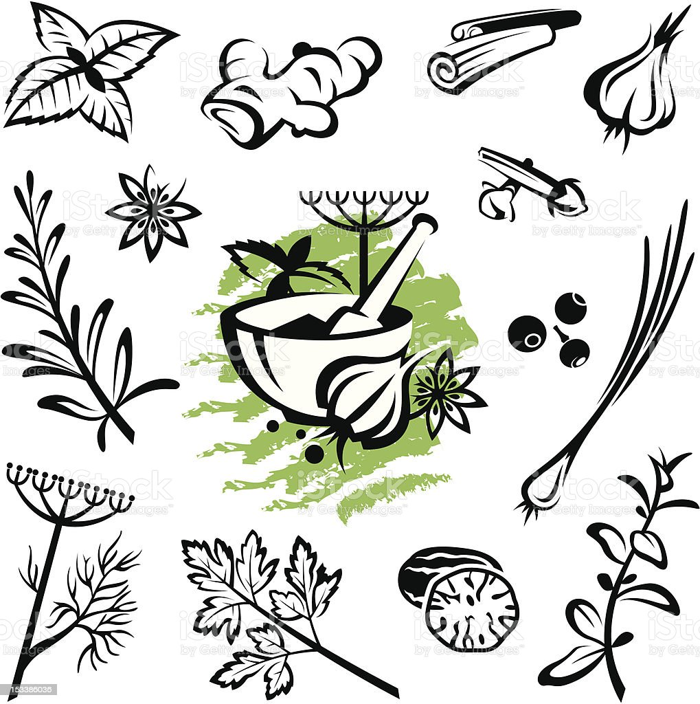 herbs and spices vector art illustration