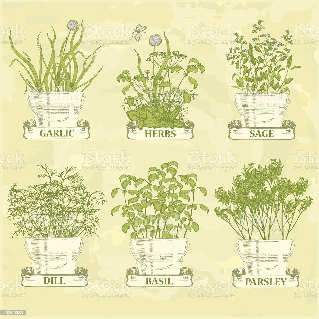 herbs  garlic, parsley, dill, sage and basil, royalty-free stock vector art