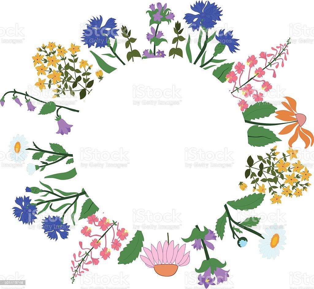 herbs in circle - Hypericum, Angustifolium, chamomile, Campanula, cornflowers, Echinacea vector art illustration