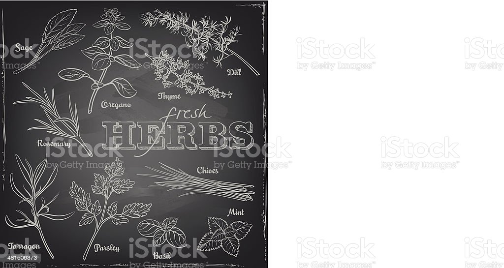 herbs set on a blackboard vector art illustration